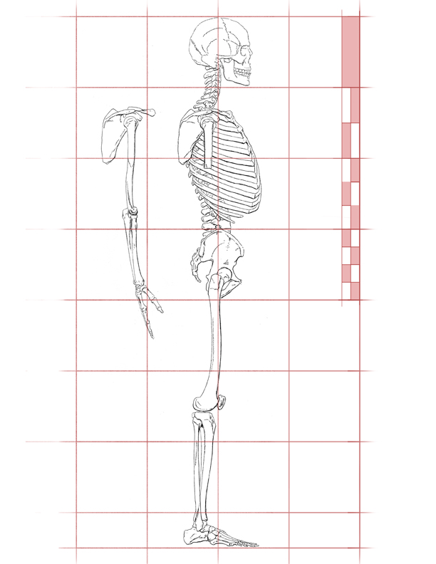 Skeleton Side View